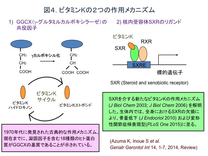 図4 ビタミンKの2つの作用メカニズム