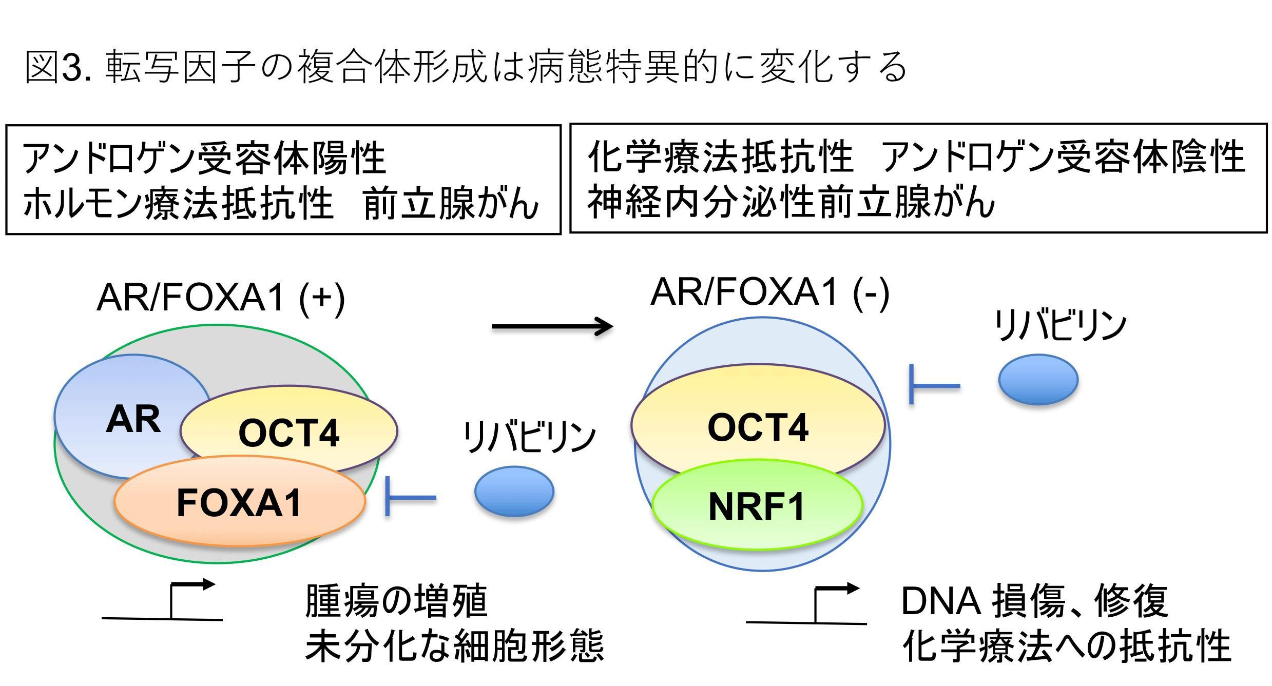 OCT4-press-3.jpg