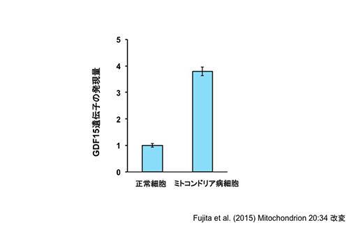 図3:ミトコンドリア病細胞ではGDF15遺伝子が活性化している