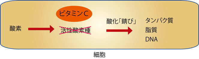図3 ビタミンCは活性酸素種を消去してからだの酸化を防ぐ