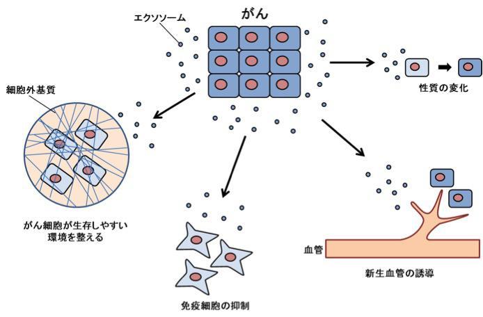 図5【がん細胞が出すエクソソームは、がんの生存に有利に働く】