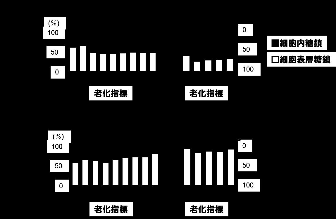 図4細胞内糖鎖のシアル酸存在比の変化