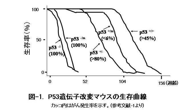 図-1. P53遺伝子改変マウスの生存曲線